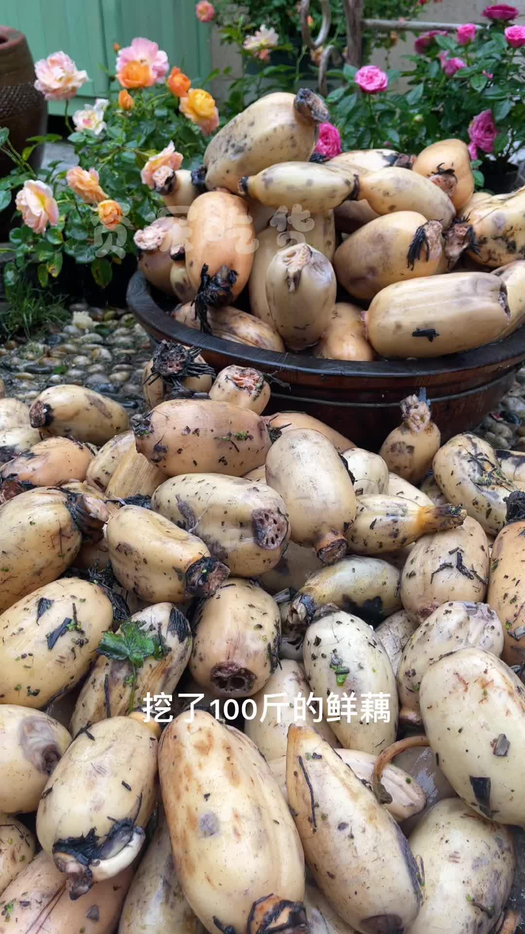 资深吃货: 做个天然的藕粉养生养生#花园生活  #藕粉